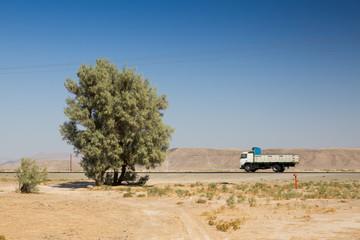 Tamarix aphylla, Sisitan and Baluchestan, Iran