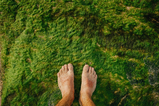 Bare feet stand on the ocean coast on top of green moist algae. Oceanic moss on rocks. Concept person and the environment.