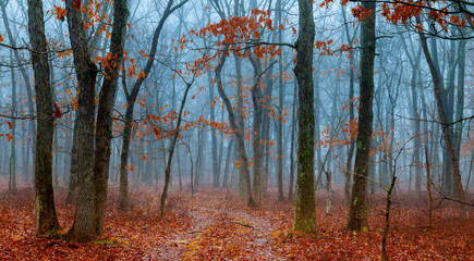 horror scene of a dark forest with blach trees and blue fog