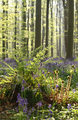 fern in sunny spring forest