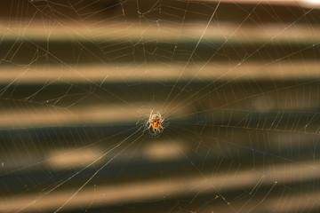 spider making a web Spider building spiderweb on isolated blurred dark background