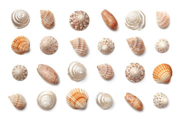 Collection of small exotic shells isolated on a white background.