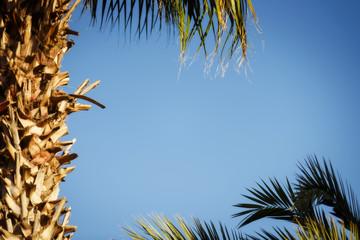 Palm tree under blue sky. Vintage background.