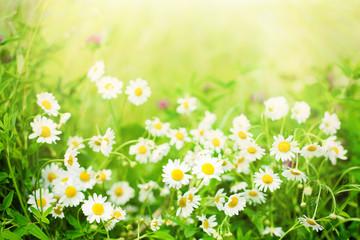 Blurred Nature Summer Floral Background