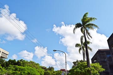 Landscape with palm trees in Okinawa