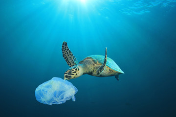 Foto op Aluminium Schildpad Plastic pollution in ocean problem. Sea Turtle eats plastic bag