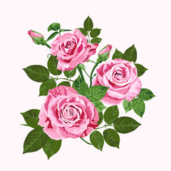 Pink roses bouquet isolated on the white