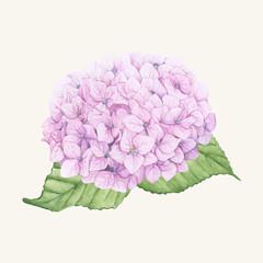 Hand drawn sketch of beautiful hydrangea