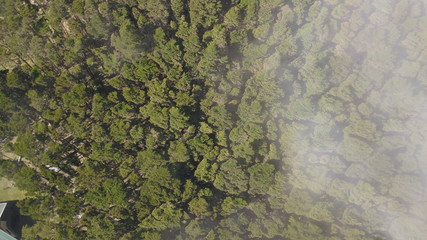 Aerial View of the Zarcero Park in Costa Rica