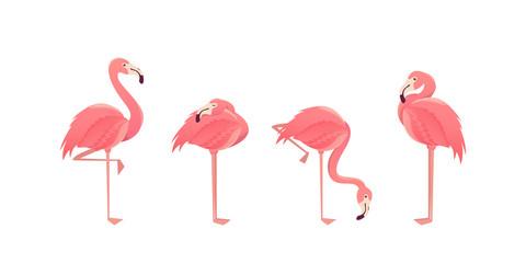 Set of flamingos isolated on white background. illustration.