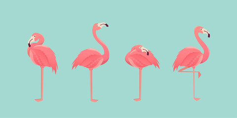 Set of flamingos isolated on background. illustration.