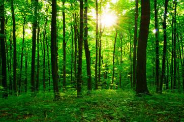 Papiers peints Forets forest green