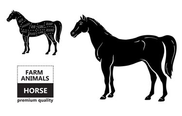 Scheme of cutting horse meat with cutting lines. Design for butcher shop, banner. Diagram on white background. Vector illustration.