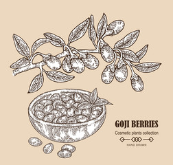 Hand drawn Goji berries on a branch. Vector illustration in sketch style.