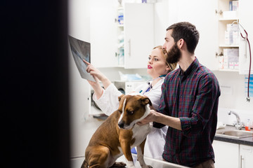 Vet discussing x-ray of dog with its owner