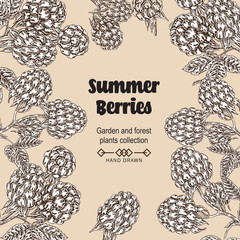Hand drawn background with summer berries. Raspberry, blackberry branches in vintage style . Vector sketch illustration.