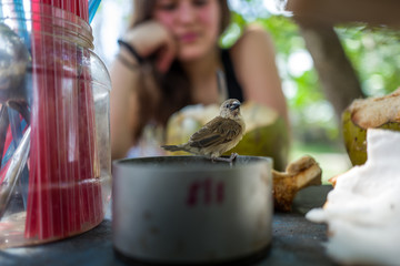 A small bird with girl in background in Bali