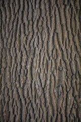 hard structured tree skin