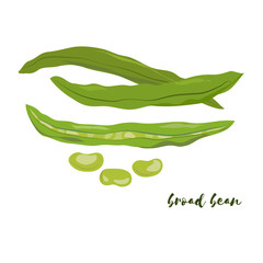 Broad bean. Flat design. Vector illustration