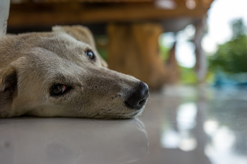 A relaxed dog in a cafe