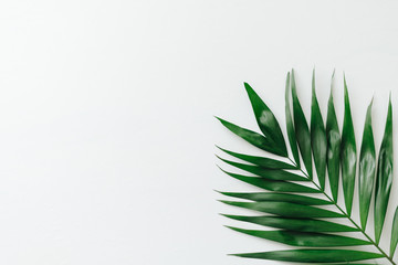 Green palm leave on white background
