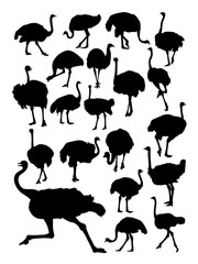 Ostrich animal detail silhouette. Vector, illustration. Good use for symbol, logo, web icon, mascot, sign, or any design you want.