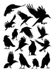 Rook, crow, raven birds animal detail silhouette. Vector, illustration. Good use for symbol, logo, web icon, mascot, sign, or any design you want.
