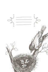 Vector illustration of hand drawn nest with spotted eggs and bird. Graphic style, beautiful illustration. Place for text in frame