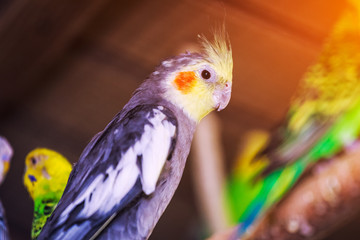 Close-up of a three beautiful  parrot