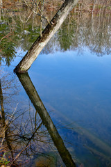 Tree limb reflected in pond in calm water