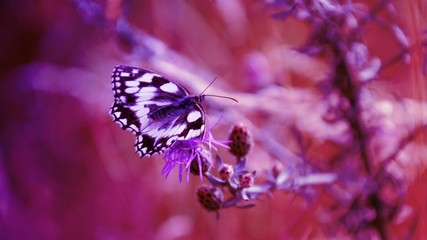 Butterfly on flower in purple color, modern gradient