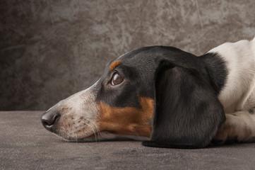 瞑想する犬