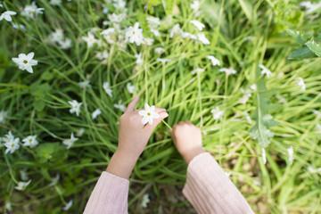 花を摘む子供の手