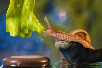 Snail on the lake