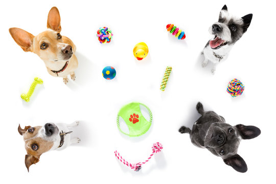 couple of dogs  with pet toys