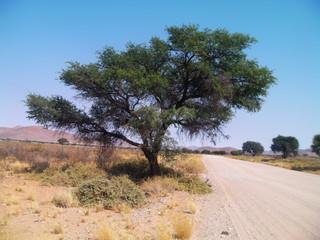Mountain Tree Road