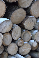 Stacked logs closeup texture background