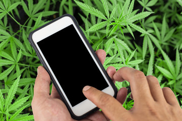Smartphone with black screen background of cannabis flowers,