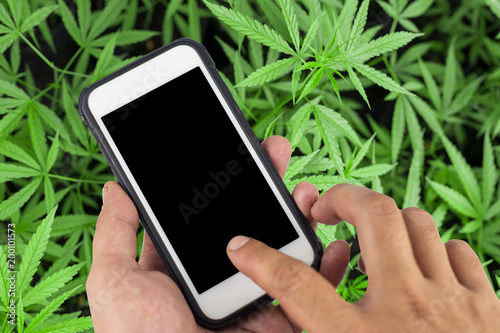 Smartphone With Black Screen Background Of Cannabis Flowers Stock