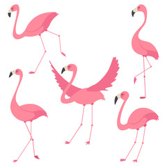Pink flamingo vector cartoon flat set. Exotic tropical bird icons collection isolated on white background.