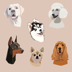 Set of six heads of different dog species: labrador retriever, chihuahua, husky, cocker spaniel, dobermann, pudel