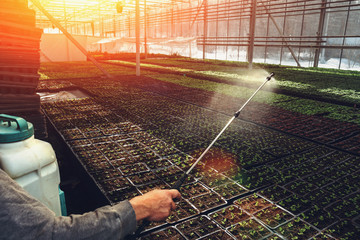 Worker watering seeding in organic hydroponic ornamental plants cultivation nursery farm. Large modern hothouse