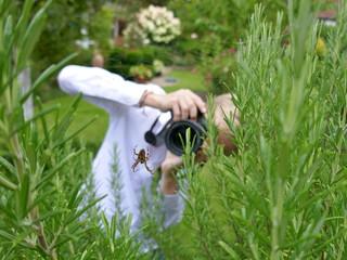 A boy photographs a cross spider in the herb garden