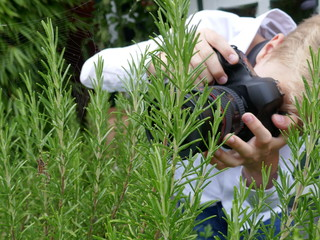 A boy blond tries to photograph a cross spider in a rosemary shrub in the garden