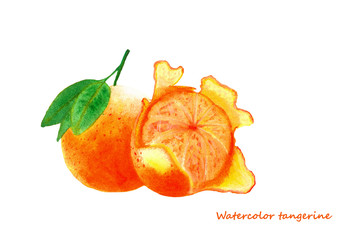 Watercolor tangerine. Isolated citrus fruit illustration on white background