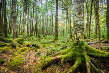 Green moss and green forest at Shiragoma no ike , Nagano