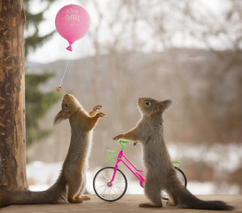 red squirrels looking at a balloon with cycle
