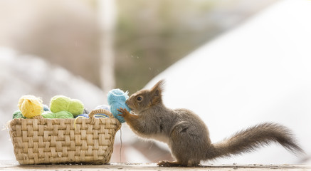 red squirrel holding yarn beside basket