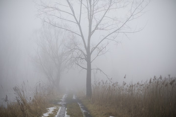 Road in the fog next to the pond.