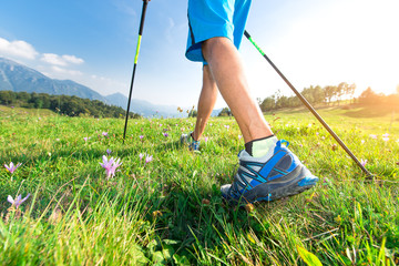Walk in the meadow with spring flowers with Nordic walking poles Wall mural
